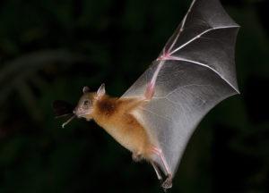 Bat flying through the dark forest