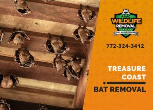 bat exclusion in treasure coast