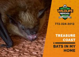 bats in my treasure coast home
