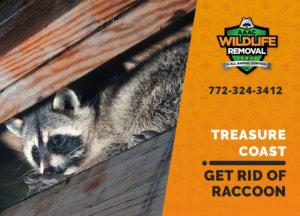 get rid of raccoon treasure coast