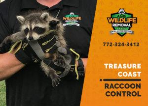 raccoon control treasure coast