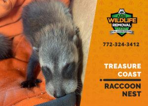 raccoon nest in attic treasure coast