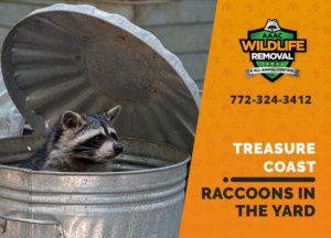 raccoons in my yard treasure coast