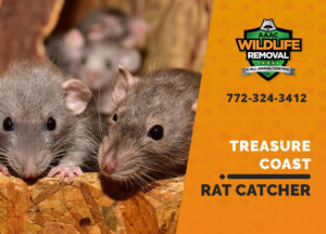 treasure coast rat catcher