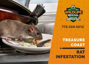 rat infestation signs treasure coast