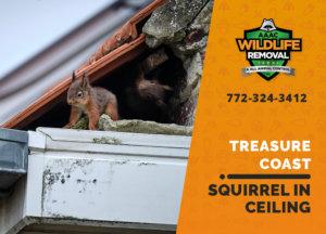 squirrel stuck in ceiling treasure coast
