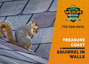 squirrel in the wall treasure coast