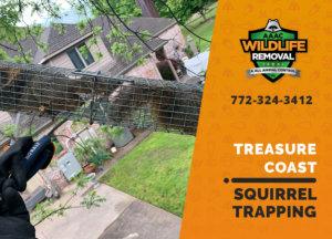 squirrel trapping program treasure coast