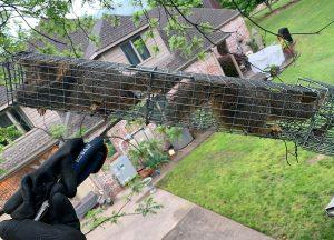Vero Beach Wildlife Removal professional removing pest animal