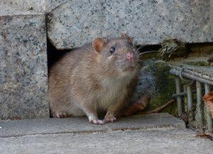 Winter Beach Wildlife Removal professional removing pest animal