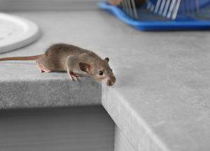 Fort Pierce Wildlife Removal professional removing pest animal