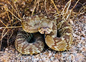 Rockledge Wildlife Removal professional removing pest animal