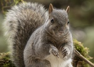 Squirrel in a yard