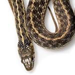 Snake in white background