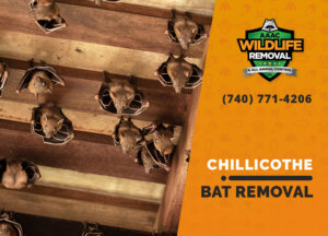 bat exclusion in chillicothe