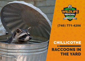 raccoons in my yard chillicothe