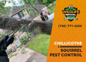 squirrel pest control in chillicothe