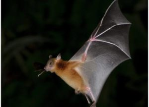 Bat looking for a place to stay at night