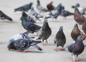 Group of birds in an open field