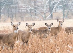 Group of deer standing on a grass field