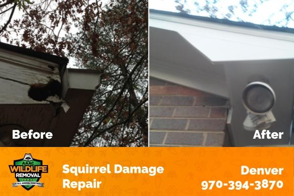 Squirrel Damage Repair Denver