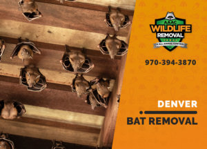 bat exclusion in denver