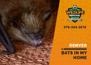 bats in my denver home