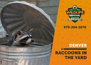 raccoons in my yard denver