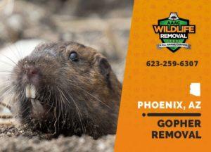 Gopher Removal in Phoenix Arizona