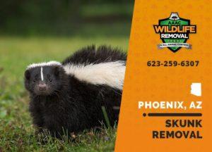 Skunk in a yard in Phoenix