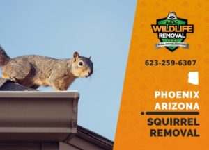 We are the best squirrel removal squad in phoenix arizona