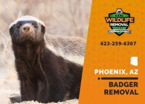 badger removal in phoenix arizona