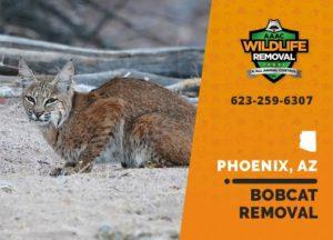 Bobcat Team removal squad Phoenix Arizona