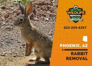 Rabbit in a yard in Phoenix