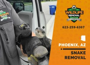 snake being removed from a house in Phoenix
