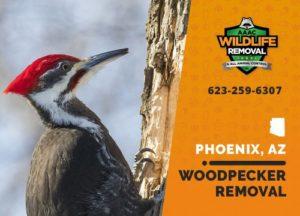 Woodpecker Removal Phoenix Arizona