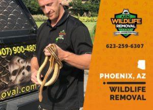 Joe Bruntz removing wildlife in Phoenix Arizona