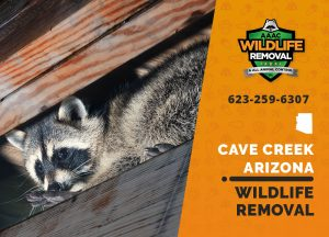 Cave Creek Wildlife Removal professional removing pest animal