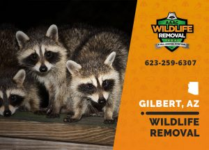 Gilbert Wildlife Removal professional removing pest animal