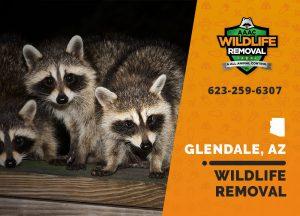 Glendale Wildlife Removal professional removing pest animal
