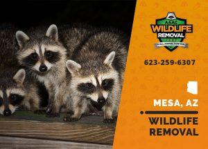 Mesa Wildlife Removal professional removing pest animal