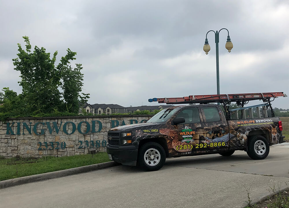 Wildlife Removal truck in front of Kingwood town sign