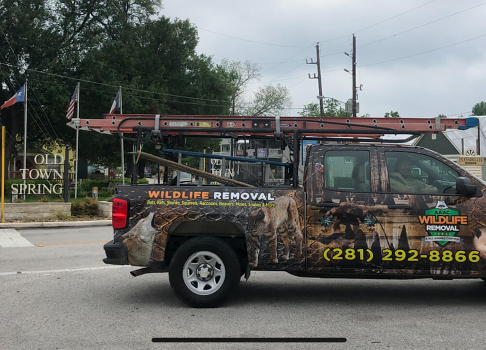 Wildlife Removal truck in front of Sring Texas town sign