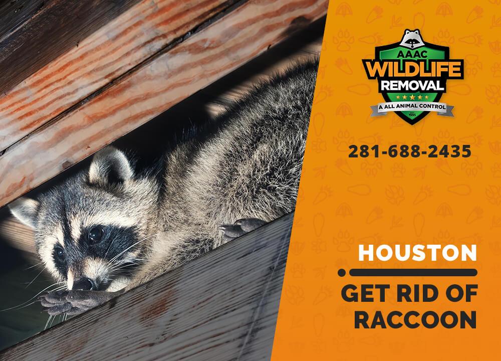 get rid of raccoon houston