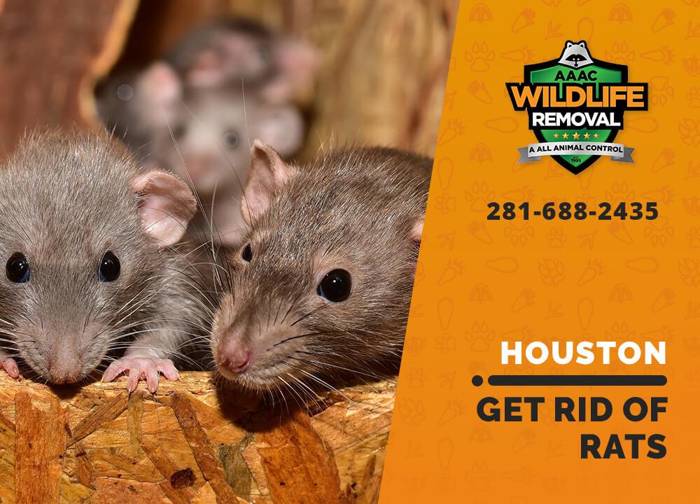 get rid of rats houston
