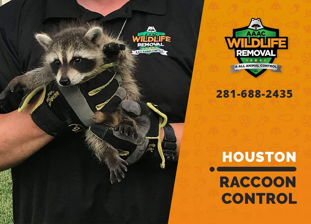 raccoon control houston