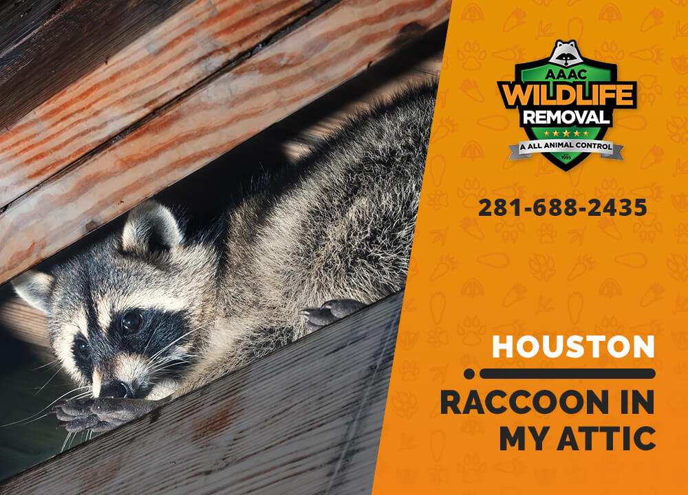 raccoon stuck in attic houston
