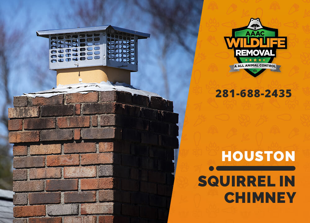 squirrel stuck in chimney houston
