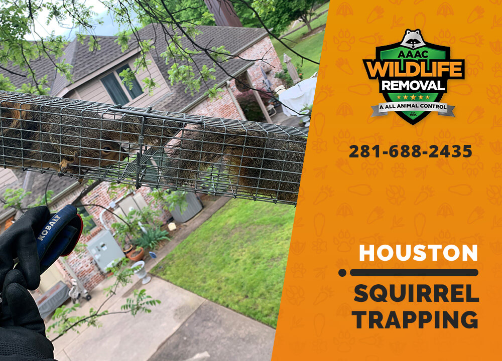 squirrel trapping program houston
