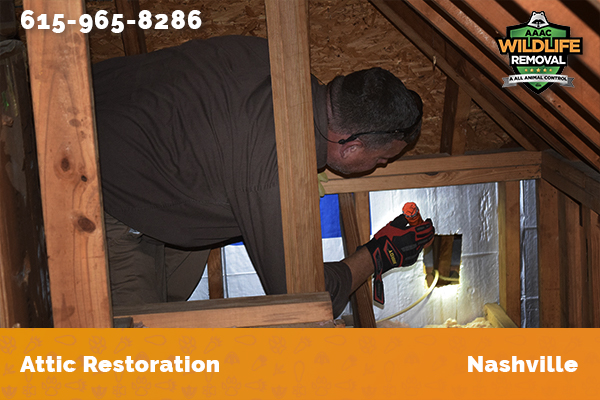 Man inspecting an attic for signs of wildlife damage in Nashville